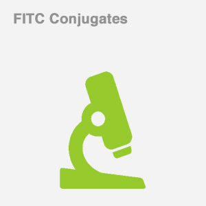 FITC Conjugates
